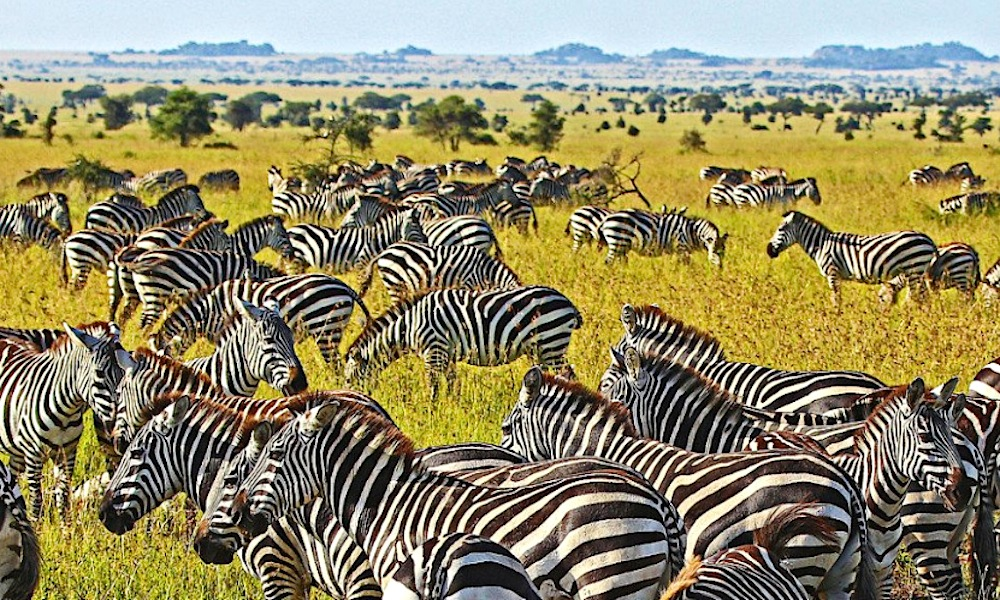 Tanzania Fastest Growing Destination for Travel Counsellors Ireland