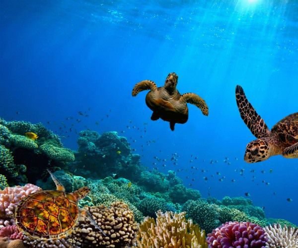 High 6 locations to swim with sea turtles