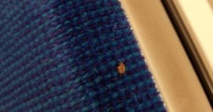 Someone just found a bed bug on a TTC subway seat