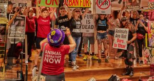 Anti-fur activists just stormed a Dolce & Gabbana store in Toronto