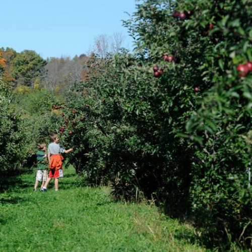 11 of the Best Places for Apple Picking in New York State