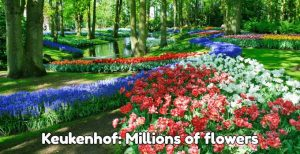 Keukenhof 2020: seven million tulips and other flowers