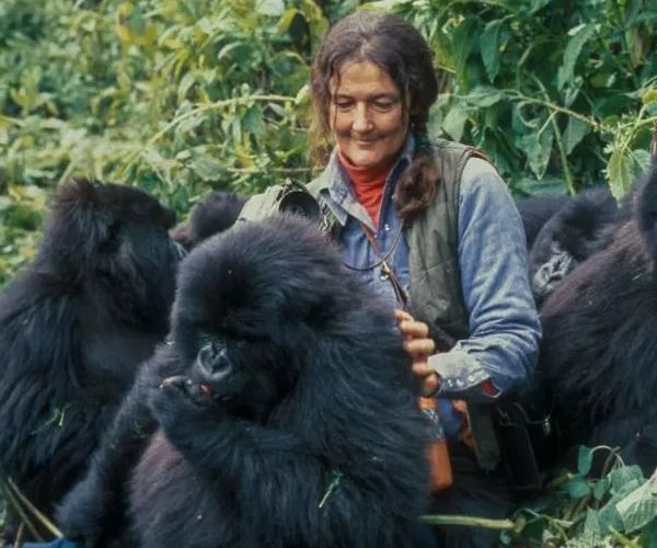 Why is Dian Fossey a key icon for gorilla tourism and conservation?