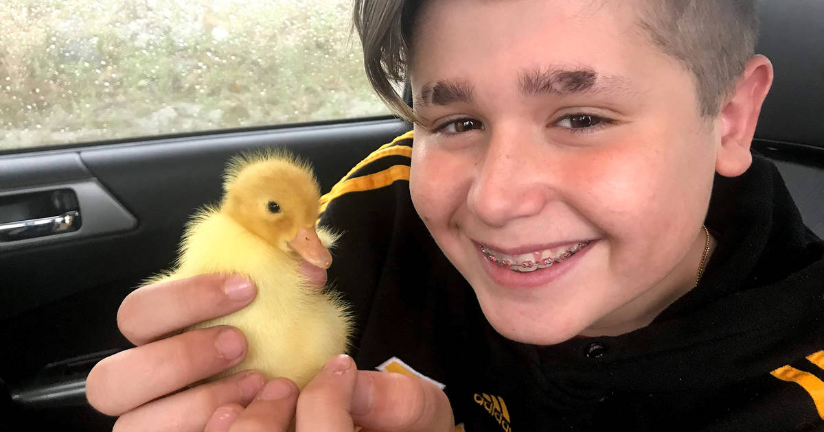 Fostering baby ducks is the latest quarantine trend in Toronto